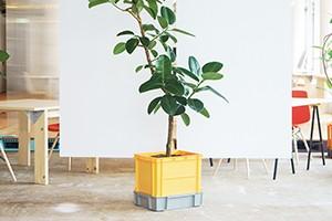 Planter Thumbnail
